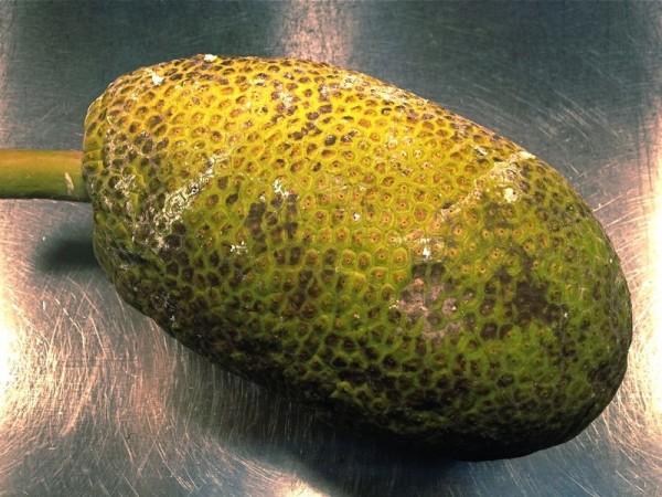 Whole Breadfruit